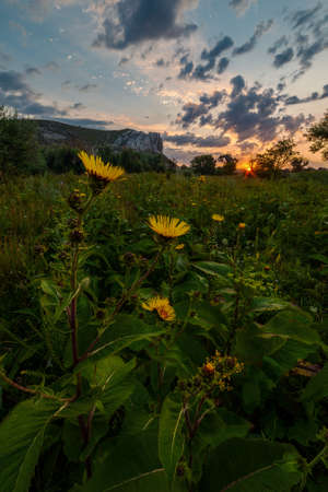 Summer morning landscape with yellow flowers and majestic sky Фото со стока