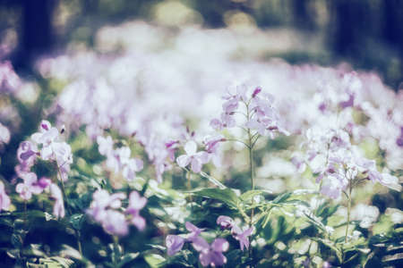 Soft spring background with wild pink flowers, selective focus, fairytail bokeh. Vintage stylization, retro film filter