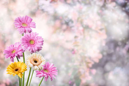 Spring gerbera flowers on beautiful background for your design
