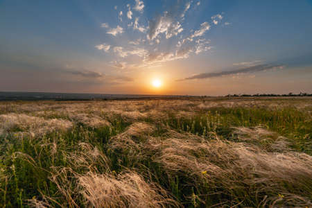 Summer landscape with beautiful sunset over feather grass in steppe Stock Photo