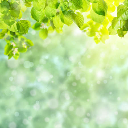Spring green card with beautiful leaves on branch and place for your text
