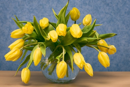 Glass vase with yellow tulips on a sideboard, blue wallpaper on background photo