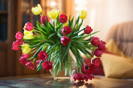 Tulips on a table in a living room photo