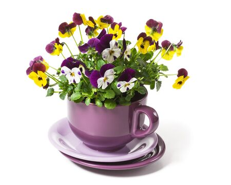 pansies: Pansies Planted in a Big Cup on White Background Stock Photo
