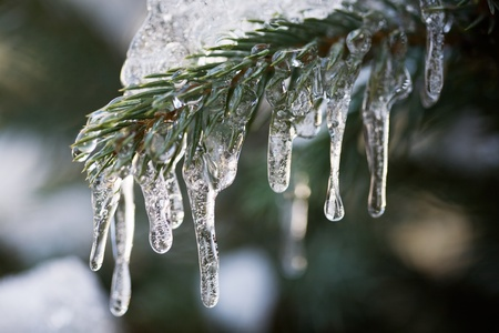 Icicles in the Fir Branch Stock Photo