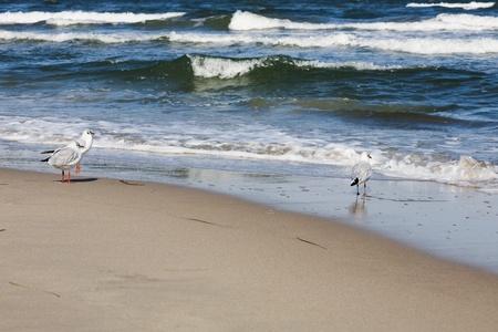 breaking wave: Seagulls on beach, Baltic Sea, Ruegen