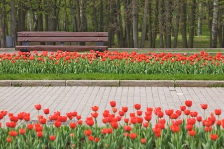banc de parc: Spring Park avec des tulipes rouges et banc