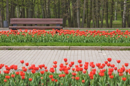 Spring park with red tulips and bench