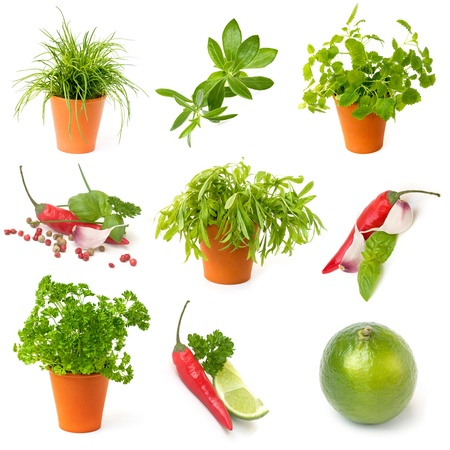 Potted herbs, Chili pepper, lime, collection on white background Stock Photo
