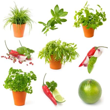 Potted kruiden, chili peper, kalk, verzamelen op een witte achtergrond Stockfoto