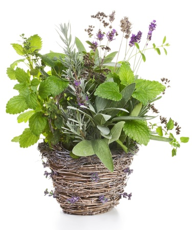 Wicker basket containing lavender, sage, lemon balm and thyme on white