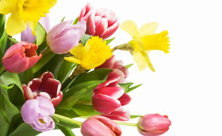 Fresh spring flowers on white background photo