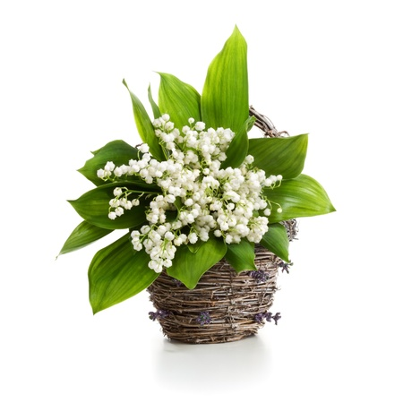 Basket with Lilly of the Valley on white background Reklamní fotografie