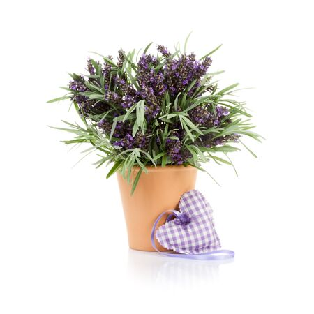 Flower pot with lavender and fabric heart on white background photo