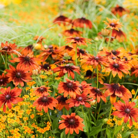 tagetes: Summer flower bed with red echinacea, marigold, tagetes and grass Stock Photo