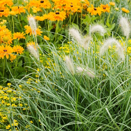 Summer flower bed with yellow marigold, tagetes and grass photo