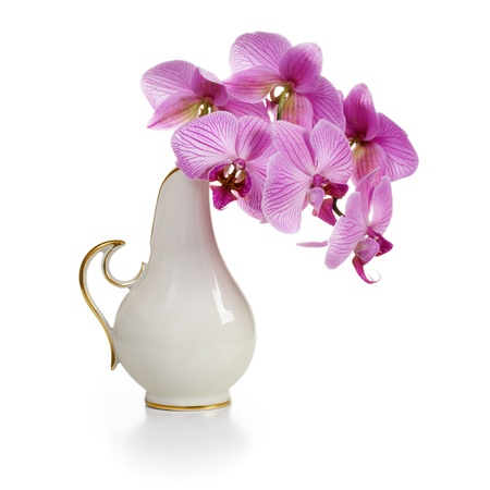 Old white porcelain vase with pink orchid flowers on white background photo