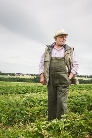Senior man in aardbeigebied, portret Stockfoto