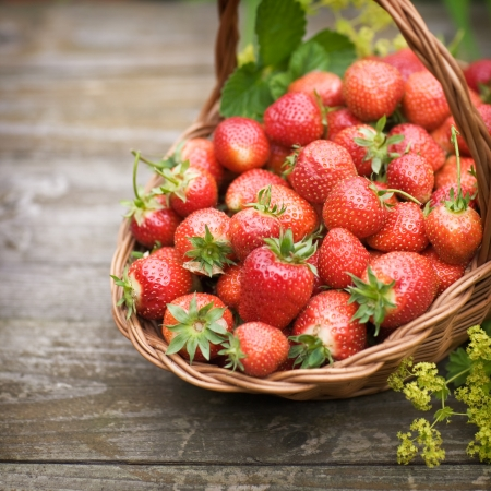 strawberry plant: Fresh strawberries in a basket on old wooden table, selective focus