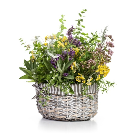 tarragon: Wicker basket of blooming scented herbs on white background