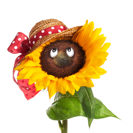 Happy face of sunflower with eyes, hat, leaves and stem on white background photo
