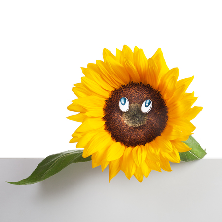 Sunflower with eyes, leaves and stem on bicolor  photo