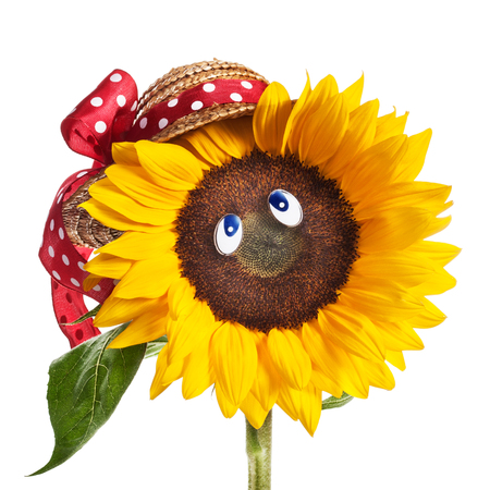 Happy face of sunflower with blue eyes, hat, leaves and stem on white background photo