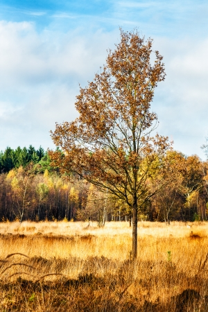 Autumn landscape with forest and lonely tree on swamp in the foreground photo