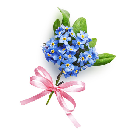 forget me not: Bunch of small blue forget me not flowers with pink bow ribbon isolated on white background