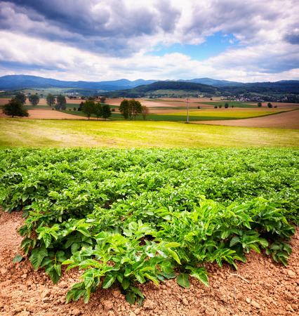 vertica: Beautiful rural landscape with potato field in foreground, Black Forest, Germany