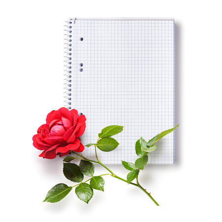Paper spiral squared notebook and red rose flower isolated on white background photo