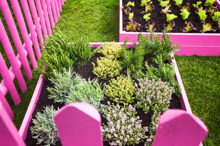 Herb Garden Pink Raised Beds With Herbs And Vegetables Trendy