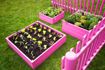 Small herb garden. Pink raised beds with herbs and vegetables