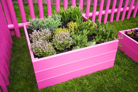 herb garden: Herb garden. Pink raised beds with herbs and vegetables Stock Photo