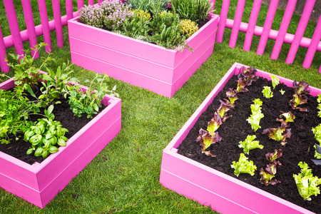 herb garden: Urban herb garden. Pink raised beds with herbs and vegetables Stock Photo
