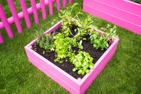 herb garden: Backyard herb garden. Pink raised beds with herbs and vegetables Stock Photo