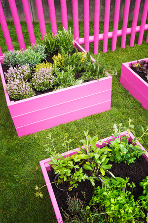 Herb garden. Pink raised beds with herbs and vegetables Stock Photo