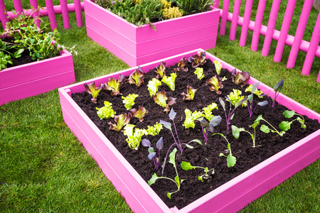garden design: Beautiful herb garden. Pink raised beds with herbs and vegetables