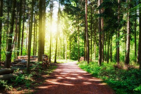tranquil: Path in beautiful green forest. Log stacks along the road. Springtime landscape. Nature reserve in Germany