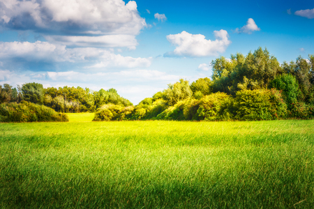 Green field with trees and blue sky. Nature landscape in summer