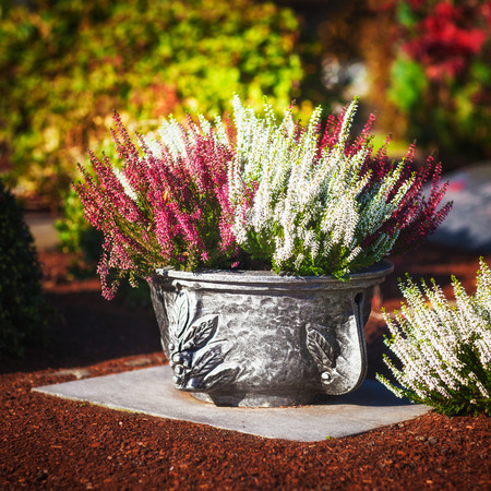 Autumn flowers at cemetery in Germany. Grave with pink and white heather in flower pot