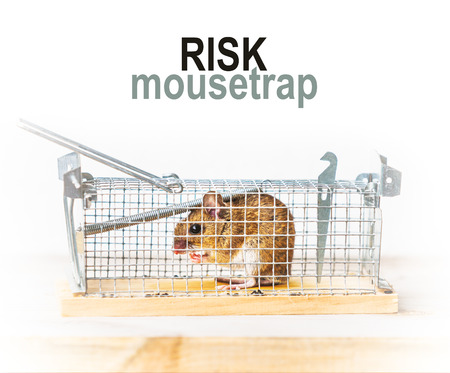 metal mesh: Metal mesh mousetrap with angry brown field mouse
