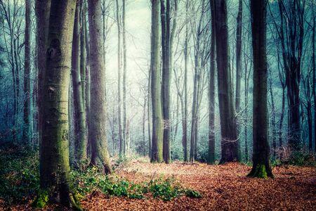 Mysterieuze mistig bos. herfstlandschap