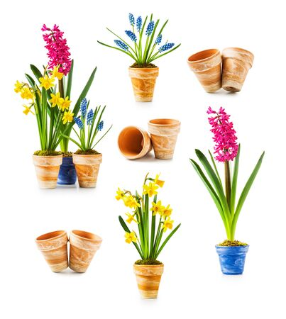 flowerpots: Spring flowers. Flowerpots with daffodil, hyacinth, muscari collection isolated on white background