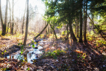 biotope: Winter forest landscape with frozen stream. Humid biotope. Nature reserve in Germany