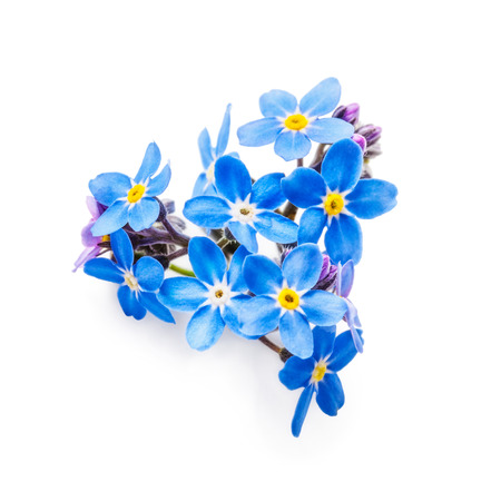 Blue forget me not flowers bunch isolated on white background  . Heart shape