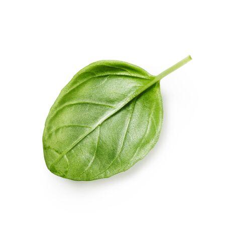 fresh leaf: Fresh basil leaf isolated on white background. Single object
