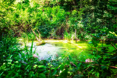 biotope: Green swamp in summer. Humid biotope. Nature reserve in Germany