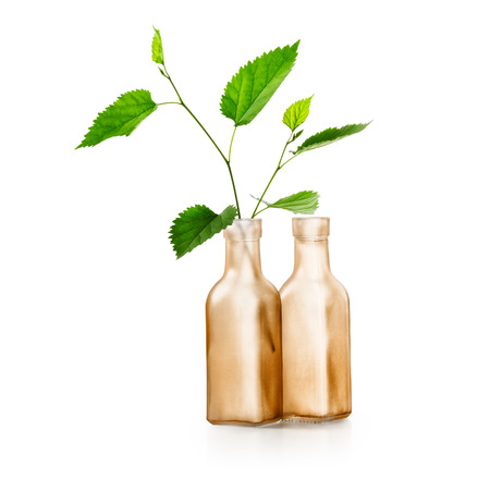 floral objects: Green spring leaves branch in vase. Brown bottle with healing plants. Floral design. Group of objects isolated on white background clipping path included