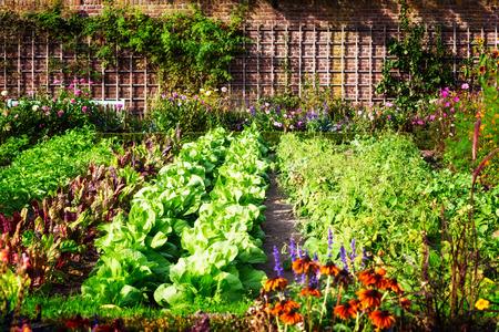 malé: Zeleninová zahrada v pozdním létě. Byliny, květiny a zelenina ve dvorku formální zahrady. Ekologické zahradnictví